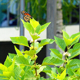 butterfly perched on leaf of bush.