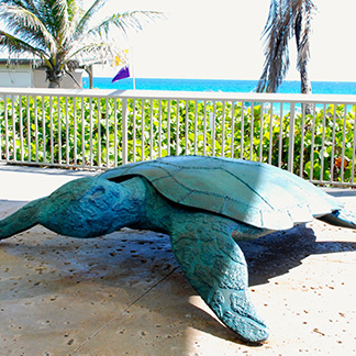 sculpture titled, opus sea turtle.
