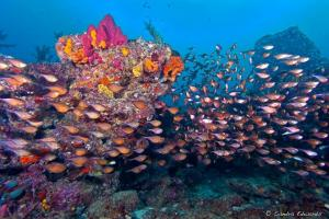 reef as home to school of tropical fish