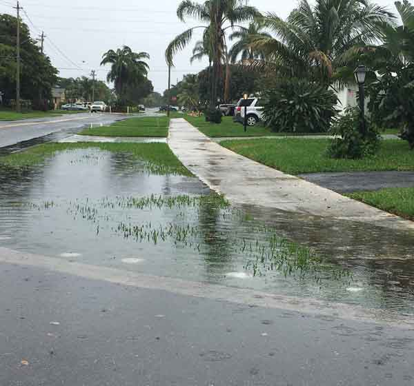 flooded-swale.jpg