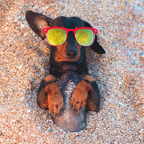 dog relaxing on the beach with sunglasses on